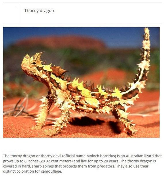 strange_animals_that_exist_in_real_life