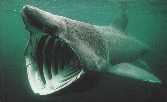 the 12 most terrifying things living in the ocean barnorama