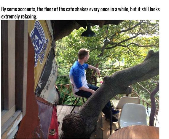 tree_house_cafe