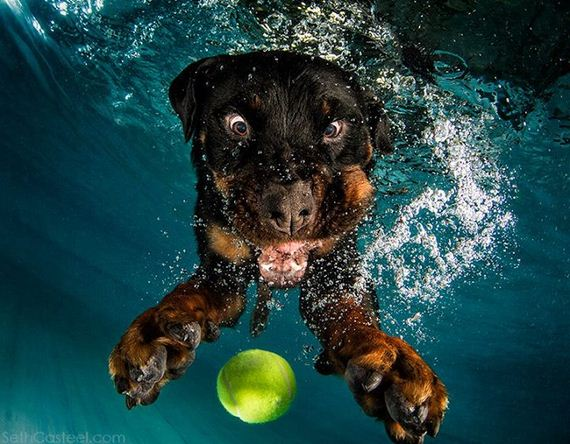 These Underwater Dog Photos Will Make Your Day Barnorama