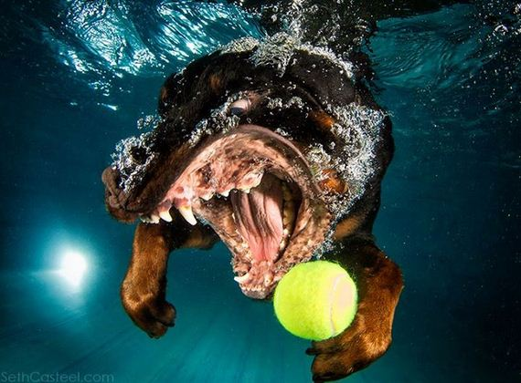 underwater_dog_photos