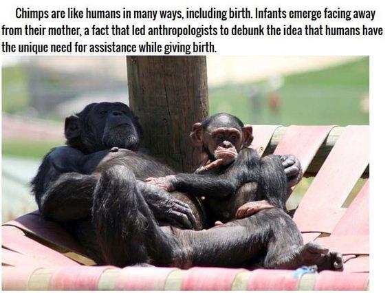 weirdest_ways_animals_reproduce