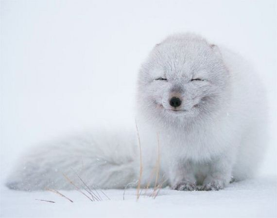 20-Happiest-Animals