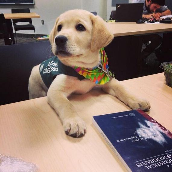 Adorable-Puppies-Their-First-Day