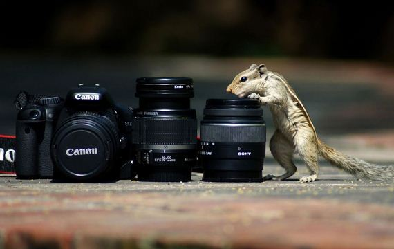 Animals-Camera-Gear