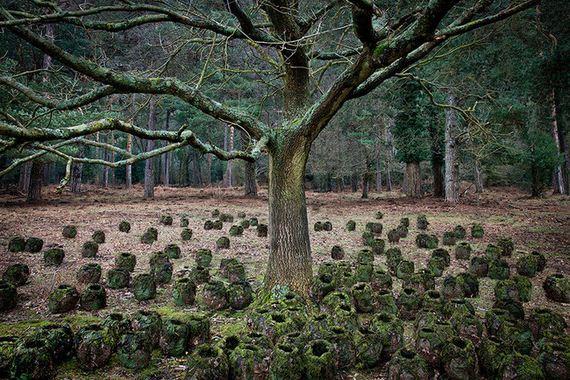 Artist-Spent-Forest