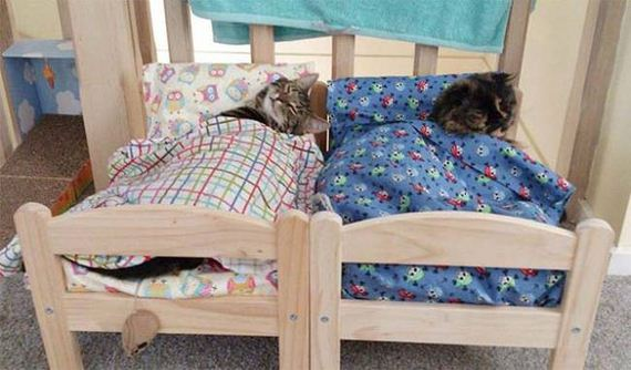 Beds-Furry-Friends
