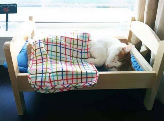 Beds-Furry-Friends