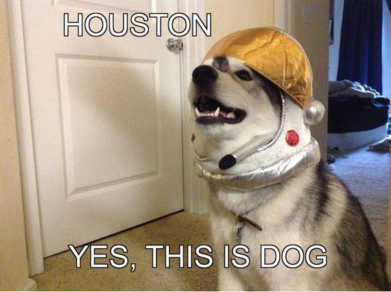 Best-Dog