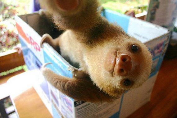 Better-Selfie