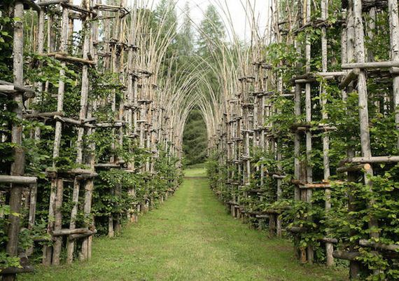 Cathedral-Made-Live-Trees