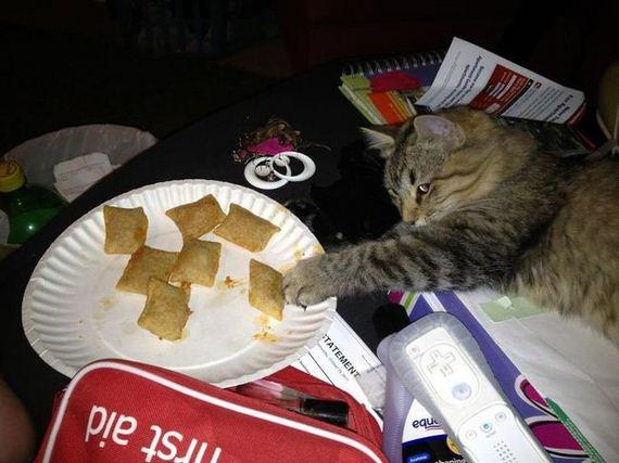 Cats-Laziness