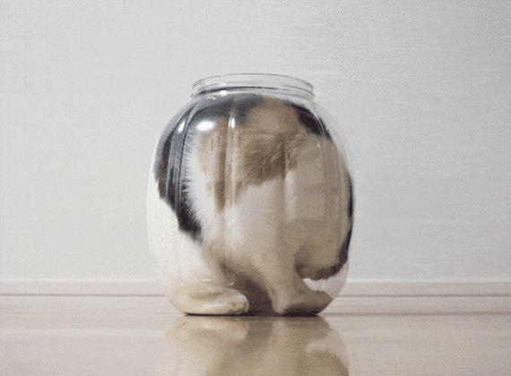 Cats-Liquid