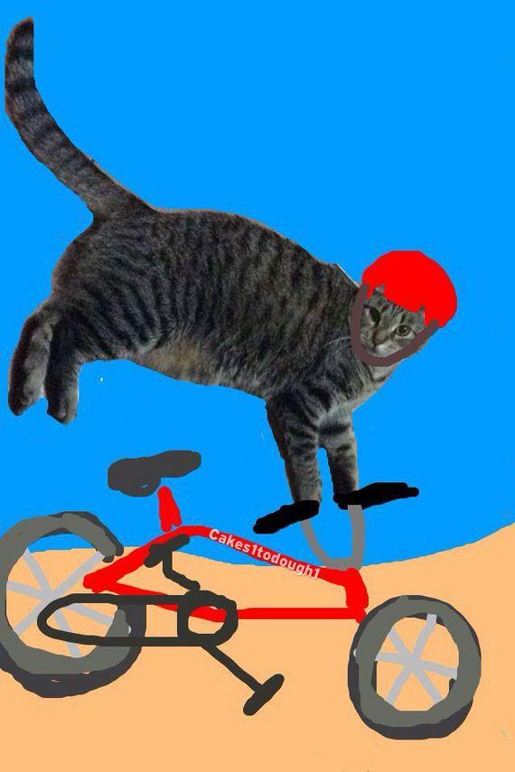 Cats-Plus