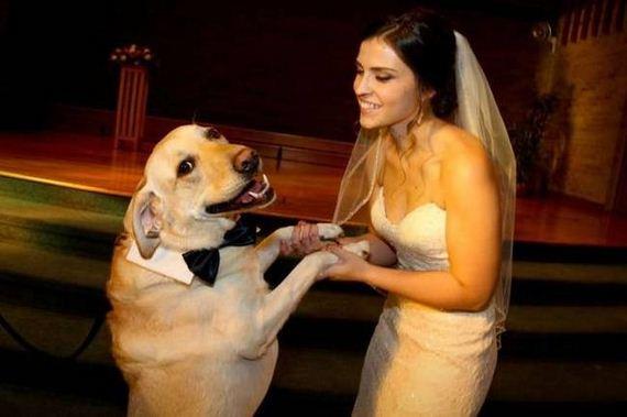 Charming-Dogs-Picking-Ladies