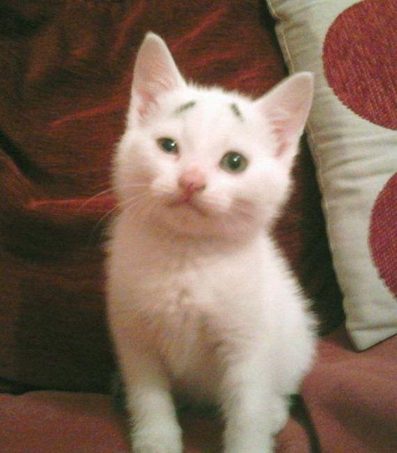Confused-Kitten