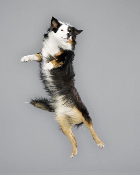 Dogs-Floating-Mid-Air