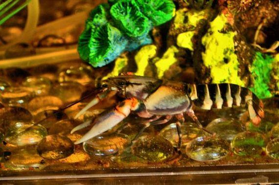 Fish-Tank-Coffee-Table