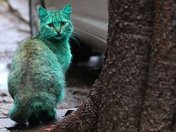 Green-Bulgarian-Cat