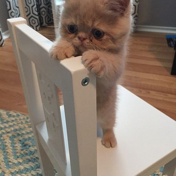 Meet-George-Cat