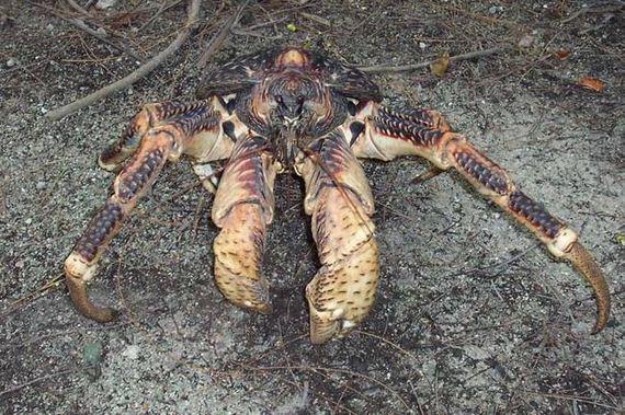 Monstrous-Crustacean