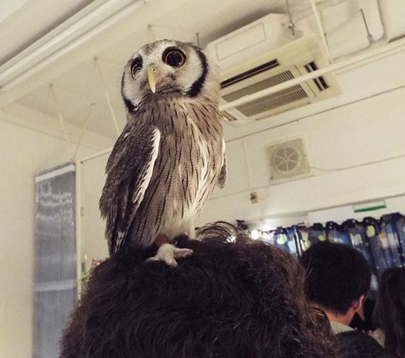 Owl-Bar-Opening-London