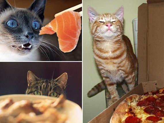 Pets-Looking-Food
