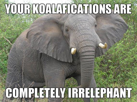 Punny-Animals
