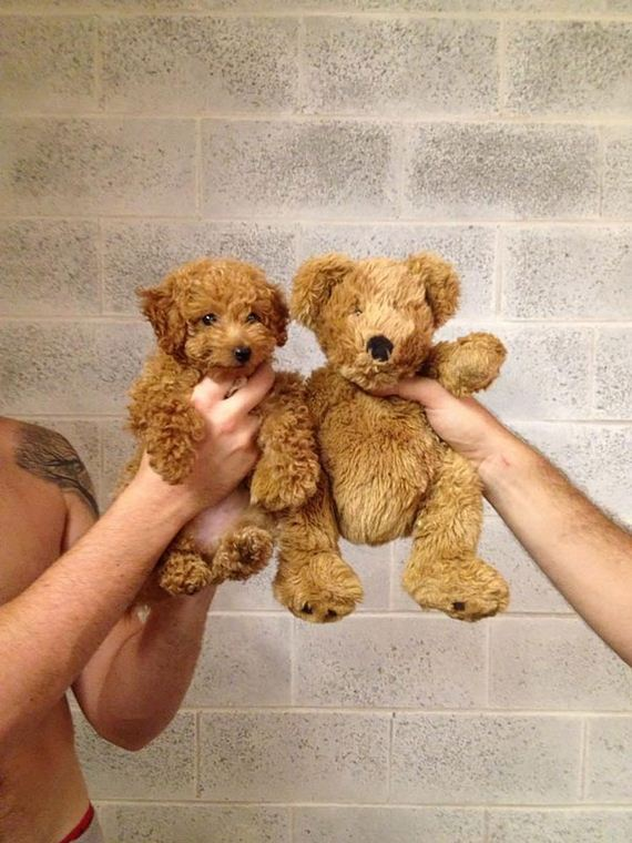 Puppies-Bears