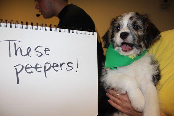 Puppy-Bowl-Stars