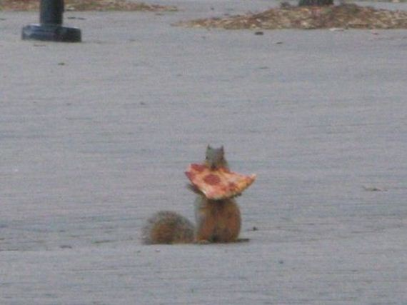 Squirrel-Pizza-Thieves