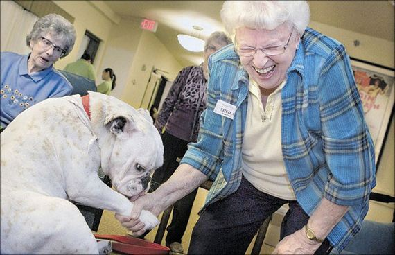 Dogs In Hospitals And Nursing Homes