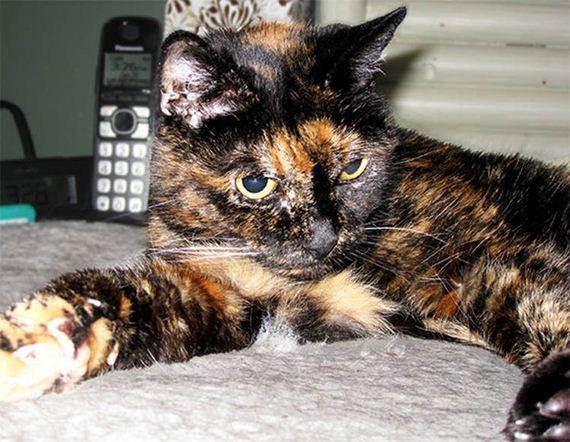 age-cat-record