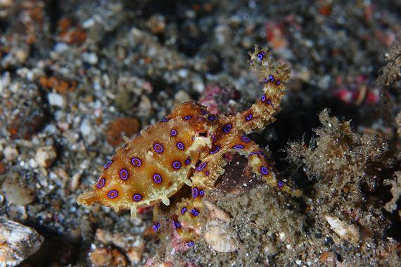 εκπληκτικό-υποβρύχια πλάσματα
