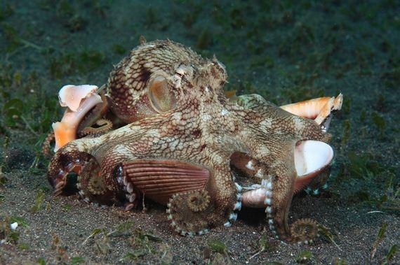 amazing-underwater-creatures