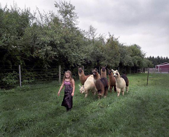 amelia-and-the-animals
