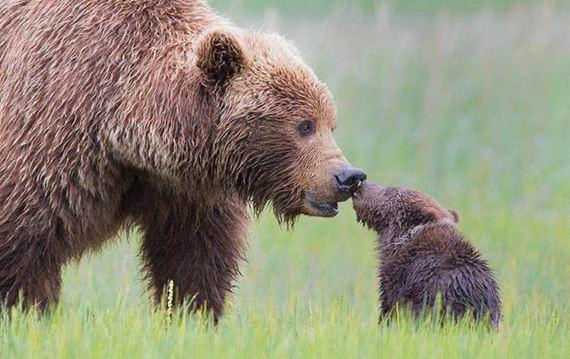 animal-baby
