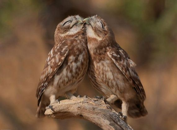 animal-couple