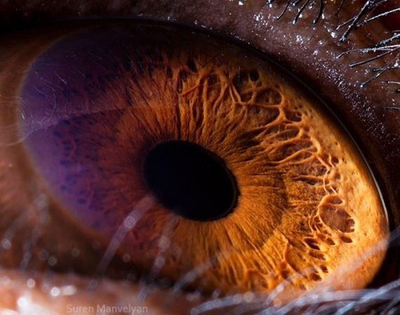ζώο μάτια