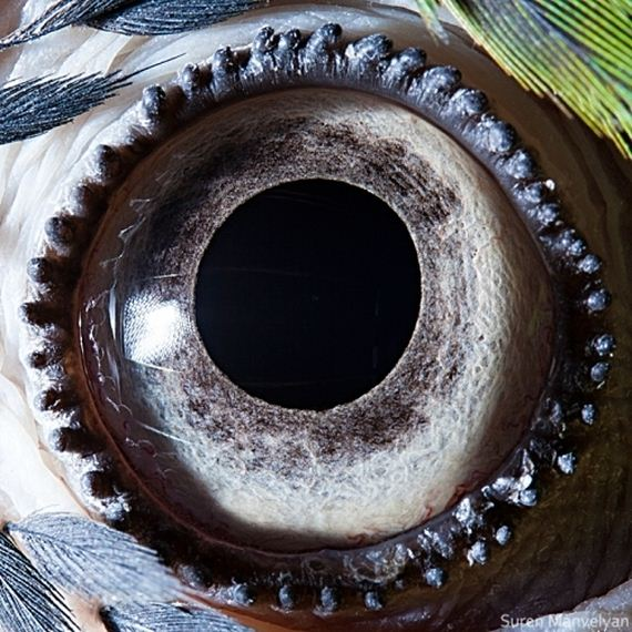 Animal Eyes: Extreme Close-Ups! - BarnoramaAnimal Eye Close Up