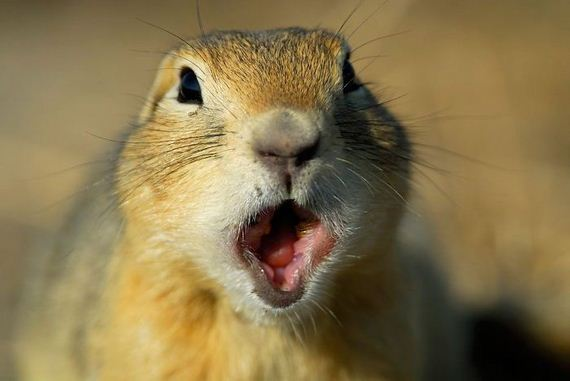 Astonished Animals Who Are Freaked Out By What S Happening