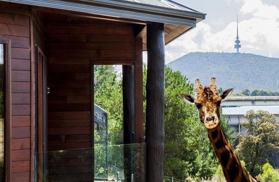 ζώα-Αυστραλία-ξενοδοχείο