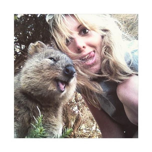 ζώα χαριτωμένο-Αυστραλίας