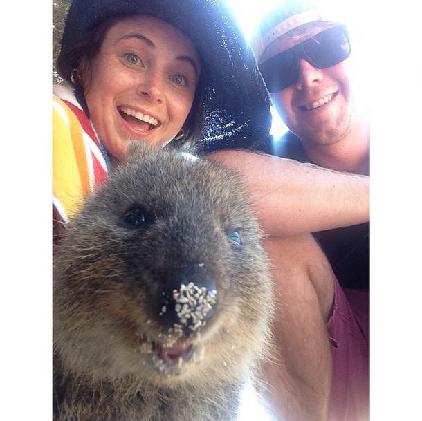 animals-cute-Australian