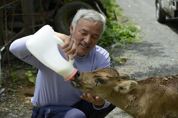 animals-feeding-fukushima