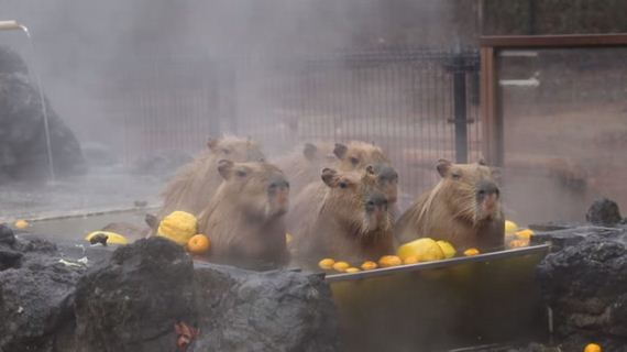 animals-japan-zoo
