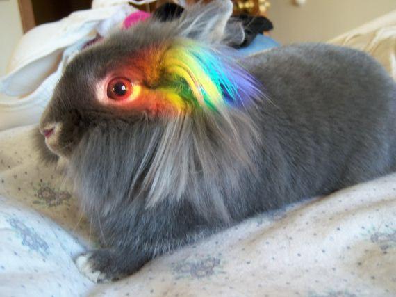 attack-rainbow