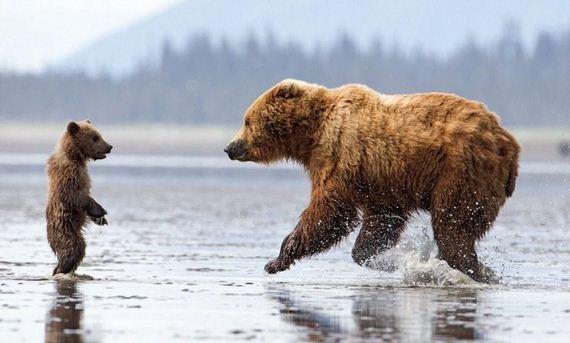 bears_hug