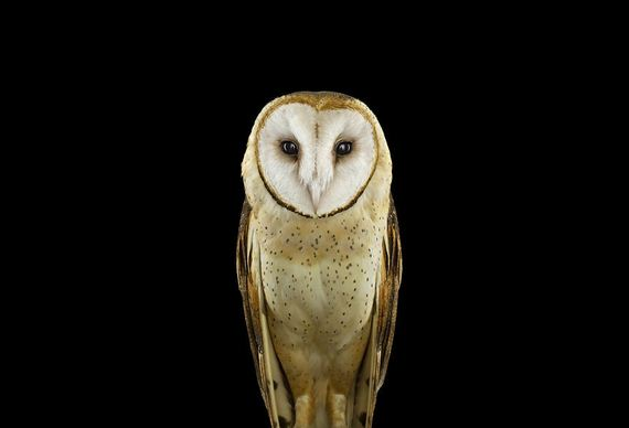 beauty-owl-photography