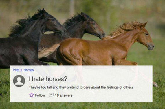 bizarre-questions-yahoo-answers